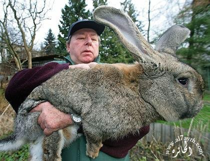 LAPIN GEANT