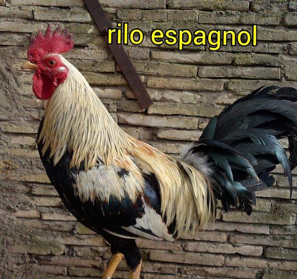 mon rilo espagnol