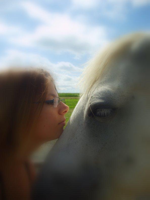 laos..... bien plus qu'un simple cheval.....