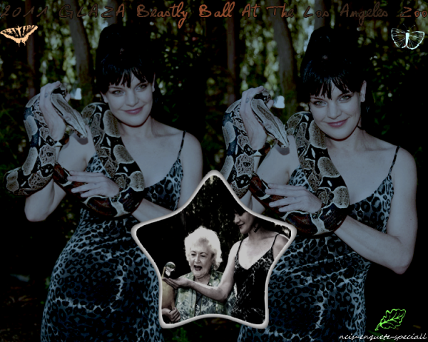 Pauley Perrette : 2011 GLAZA Beastly Ball At The Los Angeles Zoo - 18/06/2011