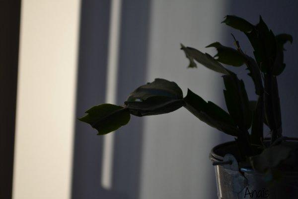 • Plante verte •