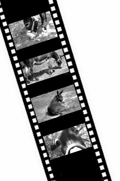 L'âne : N'empêche que le clafoutis c'est le truc le plus clafoutant de cette foutue planète !