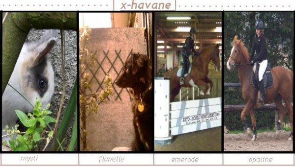 __ ღ L'air du paradis souffle entre les oreille d'un cheval ღ __
