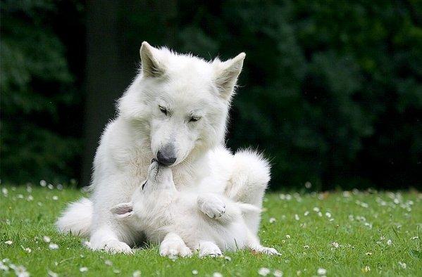 Un perro andaluz