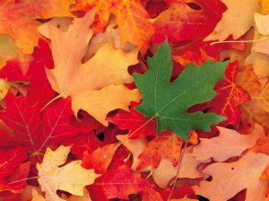 927 - Equinoxe d'automne