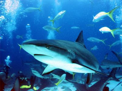 Remorqué par un requin