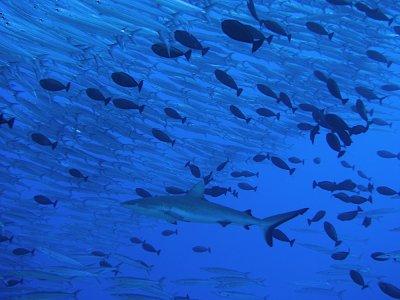 les beautées des océans
