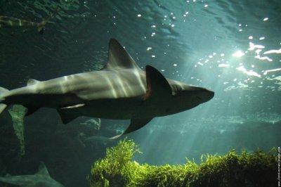Avis sur les requins maintenant?