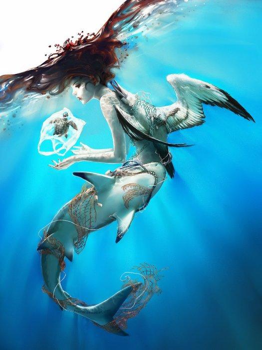 Les seigneurs des mers - Ambassadeur Shark Angels