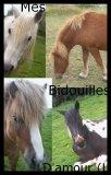 Photo de jaime-trop-les-chevaux