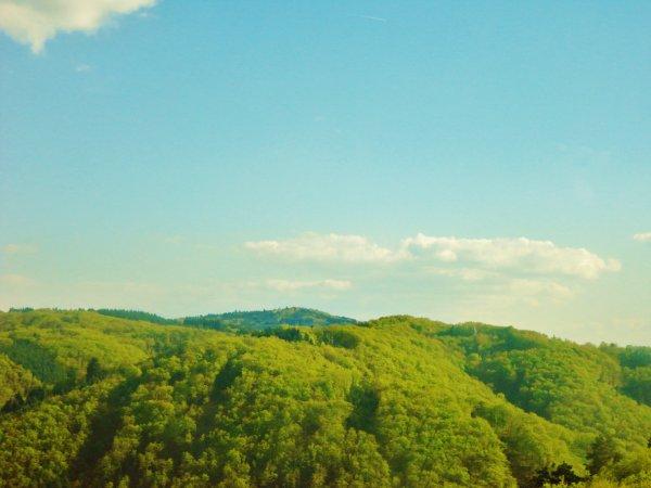 « Ecouter la forêt qui pousse plutôt que l'arbre qui tombe. »