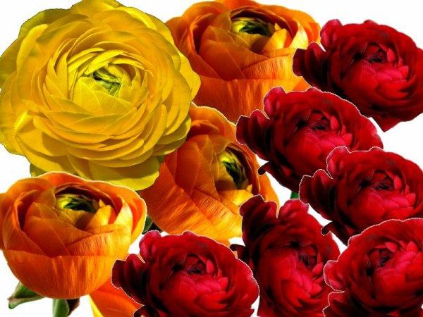 PAULINE, ces fleurs sont pour toi