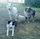 Photo de LafamilleHappyDogs