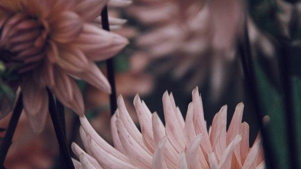 """"""" Voici un bouquet de rimes, pour mes plus belles roses """""""