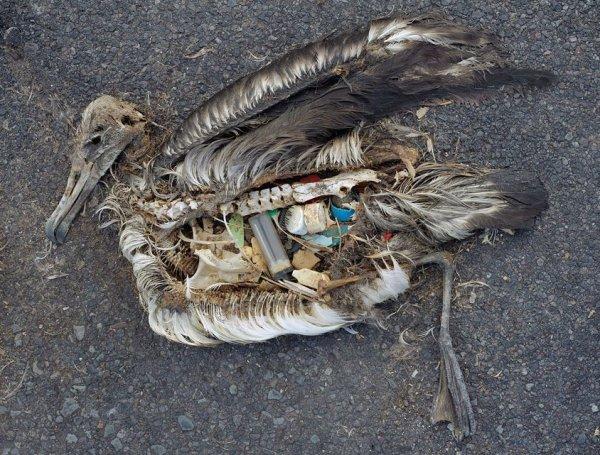 Les îles de plastiques dans l'océan Pacifique