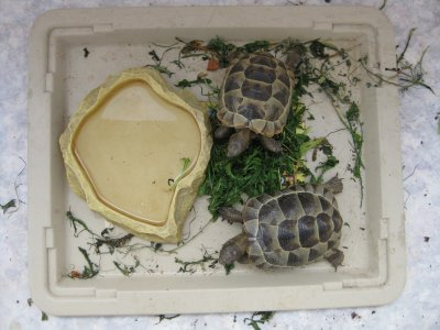 mes petites tortues
