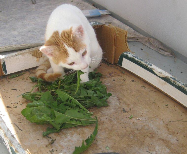 le petit chat grandit !! et fait le pitre !