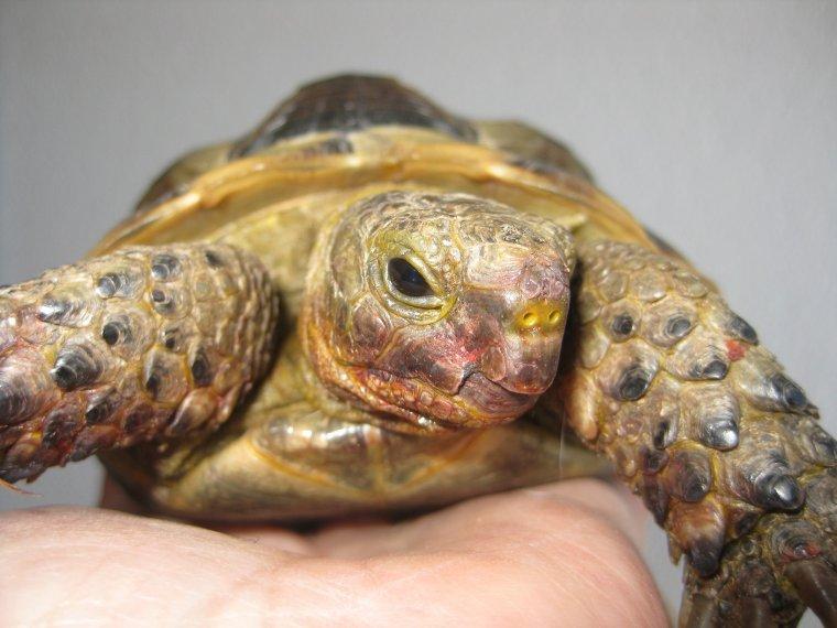 mes deux tortues