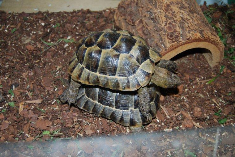 ah ces tortues !!!