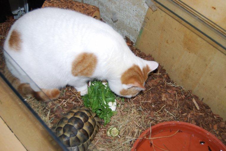tortue sortie d'hibernation