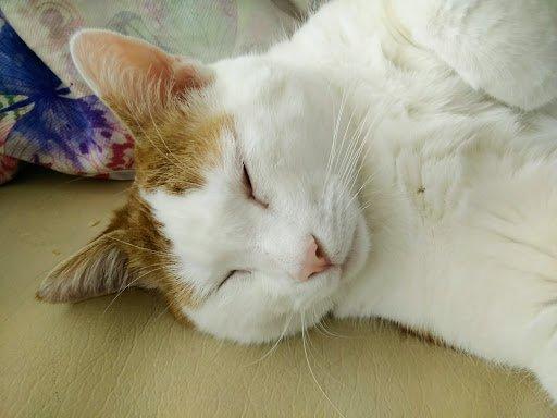 Dur dur la vie de chat !!!! ;-)