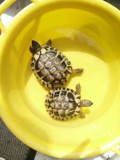 2 tortues en pension pour les vacances