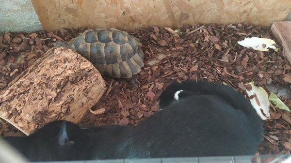 La tortue et les chats