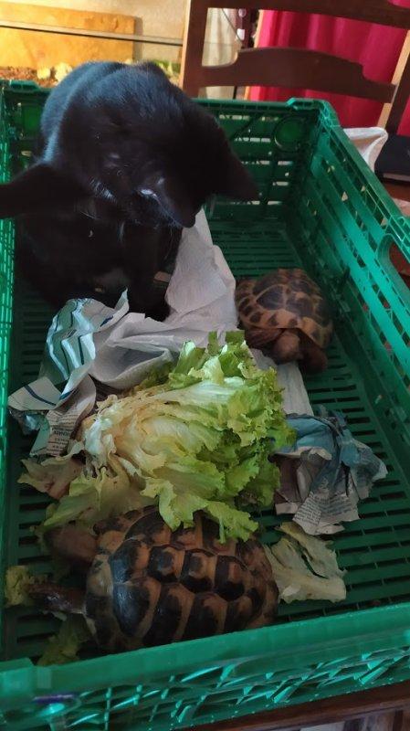 Neyla et les tortues