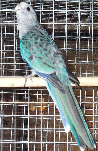 stanley bleu 2010