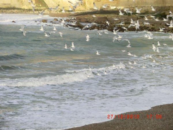 la mer et les mouettes