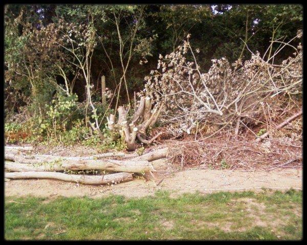 Les travaux de mon jardin avancent !
