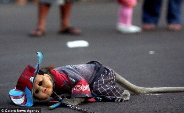 Pétition contre la maltraitance des singes en indonésie !