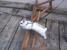 Vous avez dit lapin ?