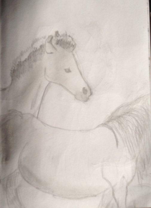 Pitit poulain et autre cheval