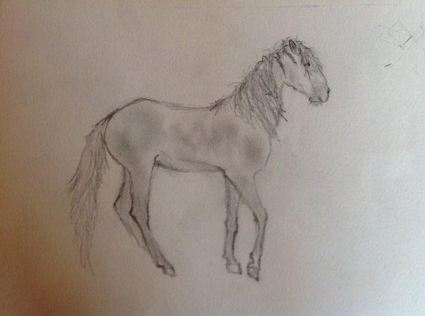 Huçul ( autre race de cheval) <3