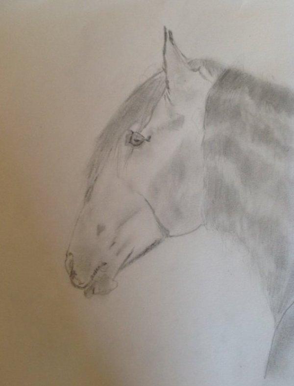 Cheval Ibérique <3