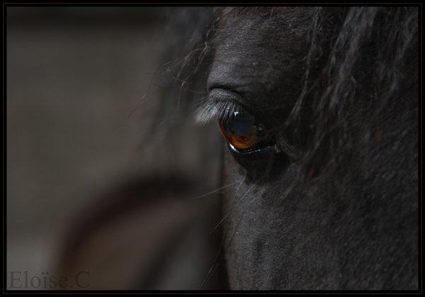 Oeils de chevaux.
