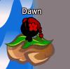 DawnBBL