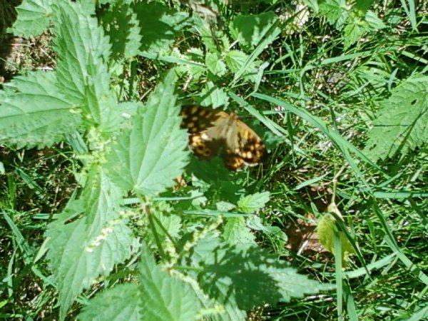 un joli petit papillon!