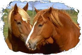 We Love horse