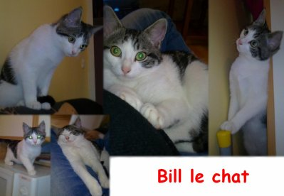 Bill notre chat.