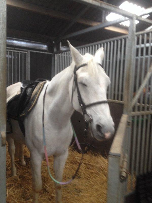 Cours d'équitation avec Karmen