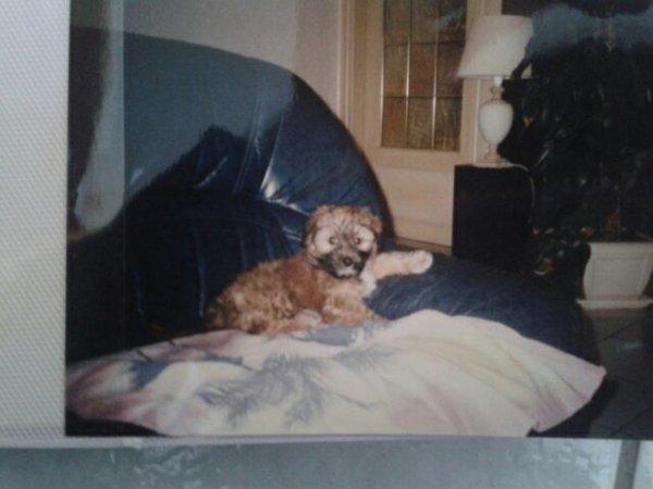 Bouba 1996