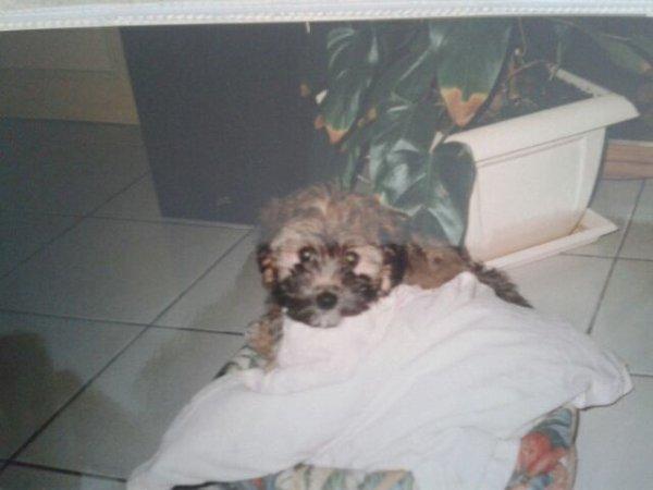 Bouba 1996/3