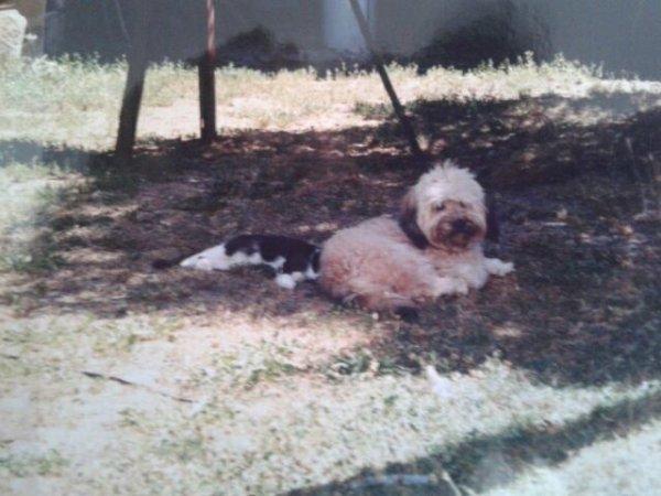 Bouba 1997