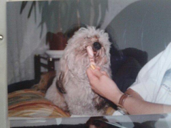 Bouba 1998