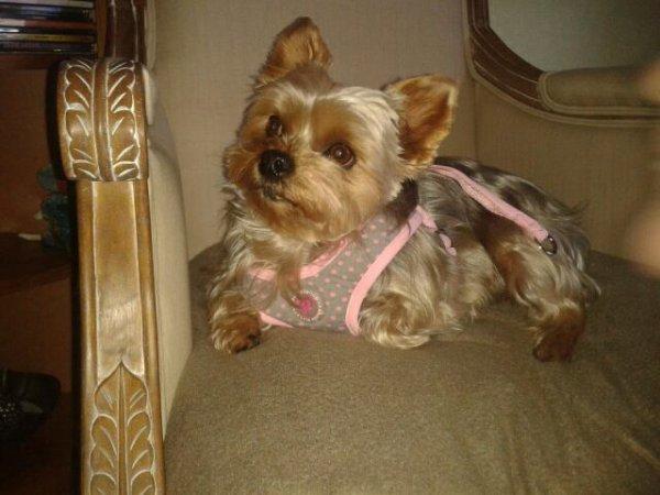 Daisy top model