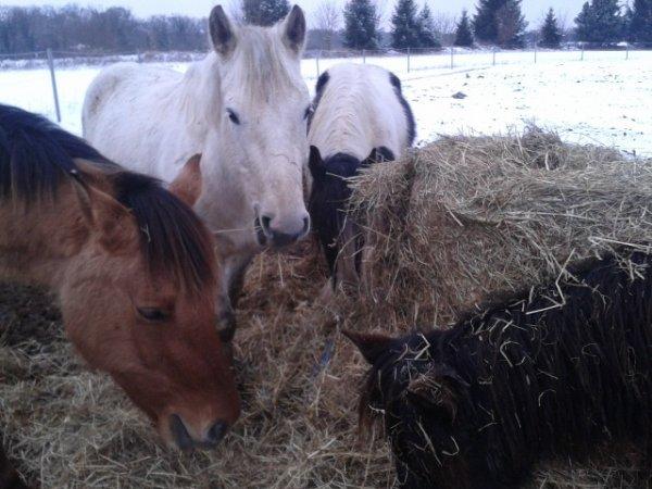 Groupe de chevaux bouffe-tout