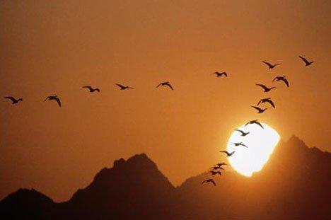 L'oiseau migrateur