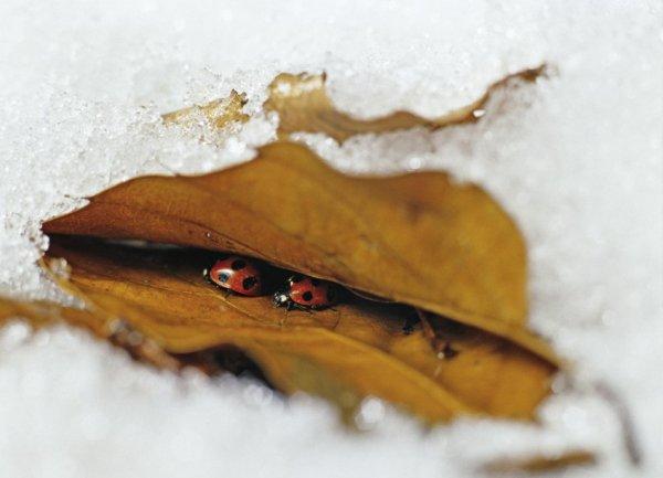 Haïkus d'automne